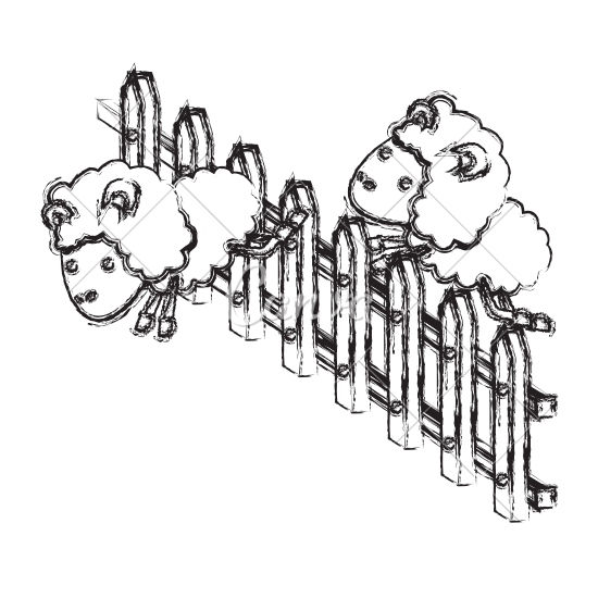 550x550 Sheep Animal Couple Jumping On Wooden Fence