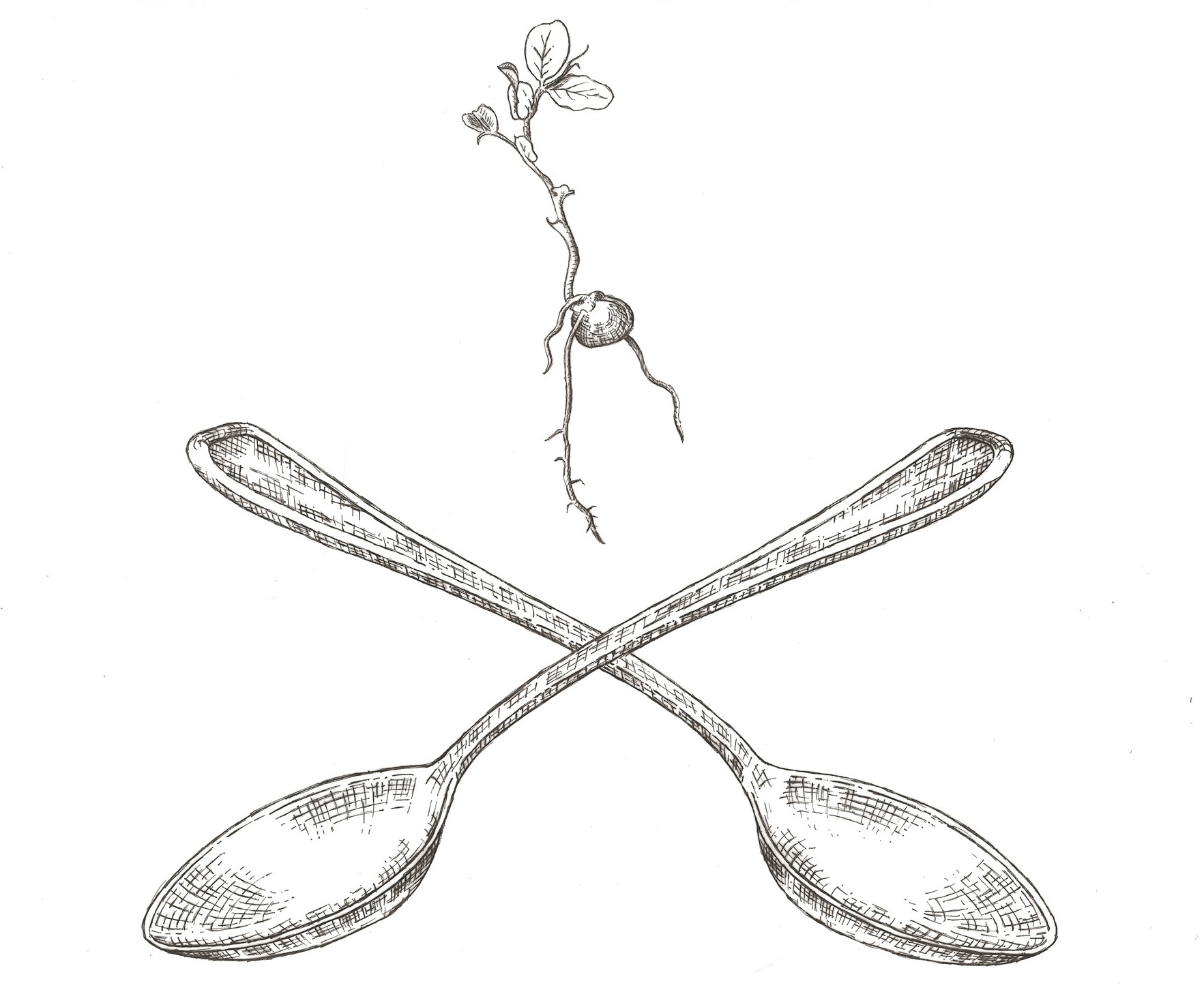 1765x1455 Seed Sprout Spoon Catering Amp Events About