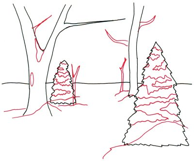 Woodland Drawing