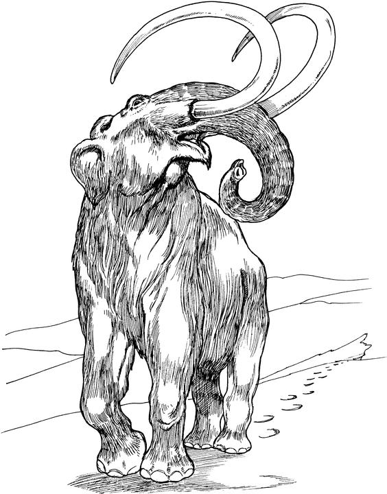 564x720 Nature Observations Meanings Woolly Mammoth Warmth