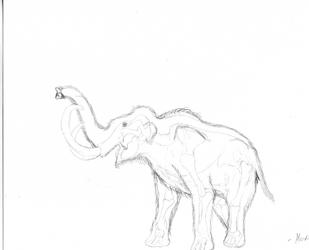 1024x827 Woolly Mammoth Reconstruction Ii By Alfapachyderm
