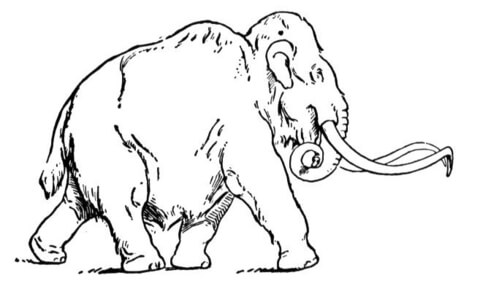 480x289 Woolly Mammoth Coloring Page Free Printable Coloring Pages