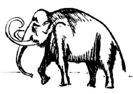450x318 Mammoth Drawings Drawing And Crafts Draw