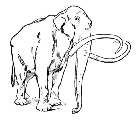 480x420 Wooly Mammoth Coloring Page Free Printable Coloring Pages
