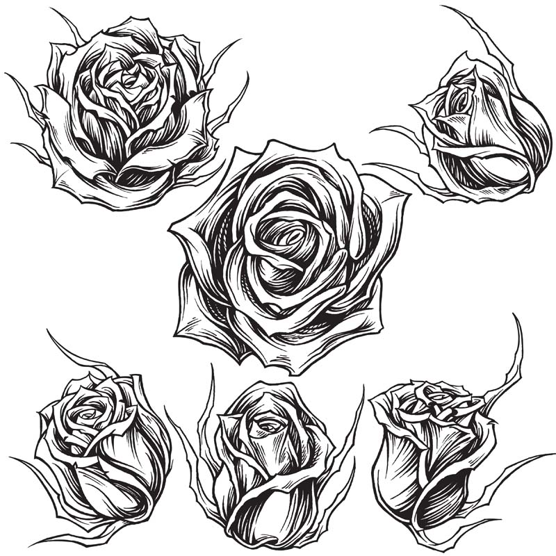 800x800 Roses Line Work Vector Art Tshirt Factory