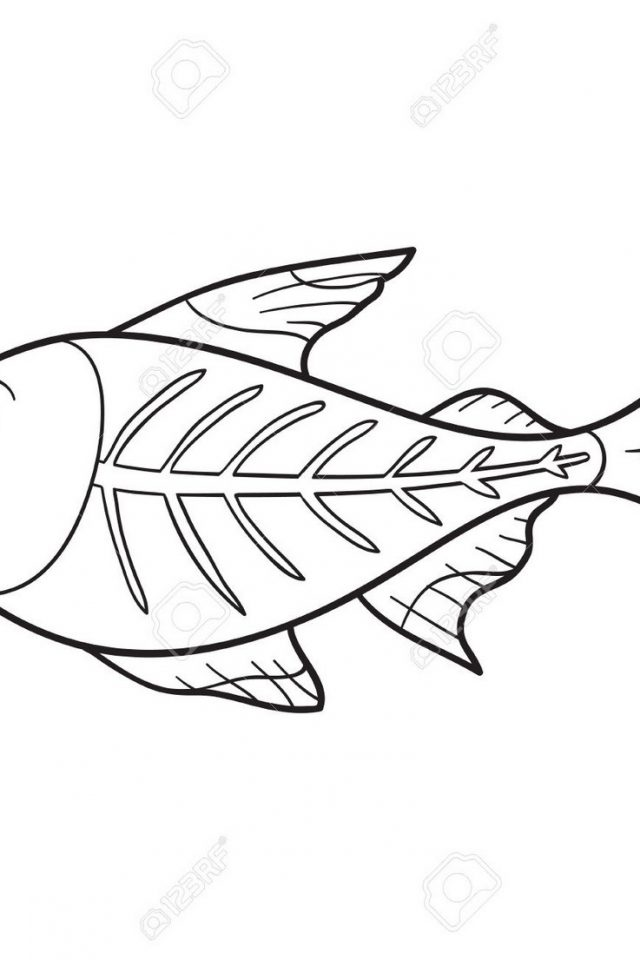 640x960 x ray fish coloring page