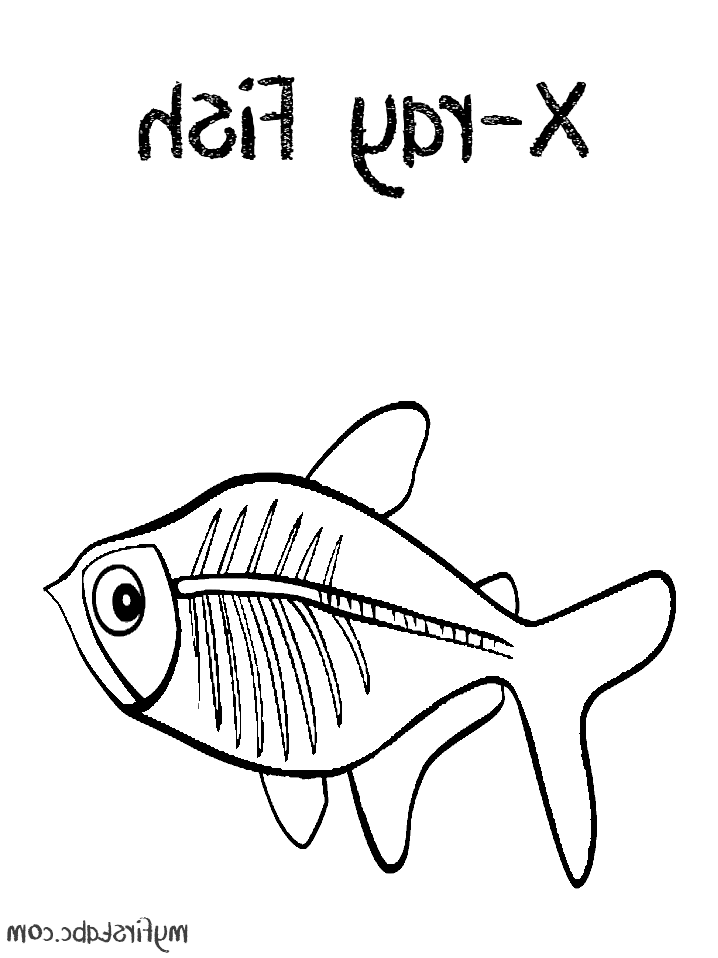 718x958 X Ray Fish Coloring Page For Kids