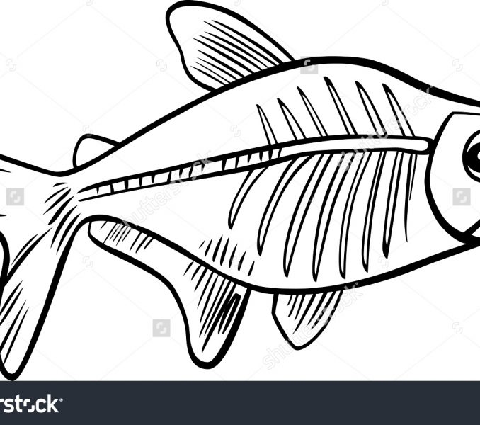 678x600 Images X Ray Fish Coloring Page 22 For Download Coloring Pages