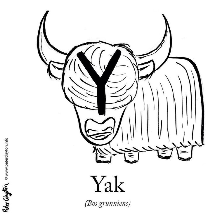 Yak Drawing