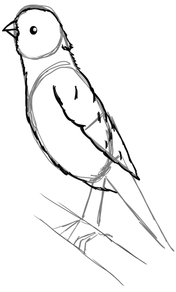 350x580 How To Draw A Canary With Step By Step Tutorial To Drawing