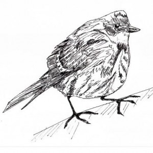 300x300 Yellow Throated Vireo Bird Black And White Original Art Aftcra