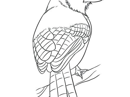 440x330 Blue Bird Coloring Page Lovely Blue Bird Colouring Pages Mountain