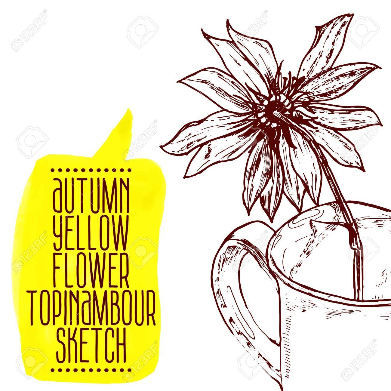 1300x1300 Highly Detailed Hand Drawn Yellow Flower Jerusalem Artichoke