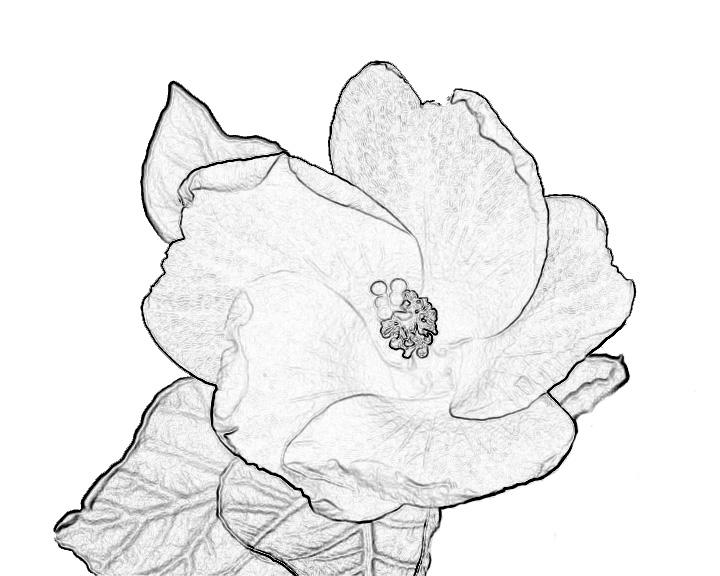 720x576 Yellow Flower Terry Mellway