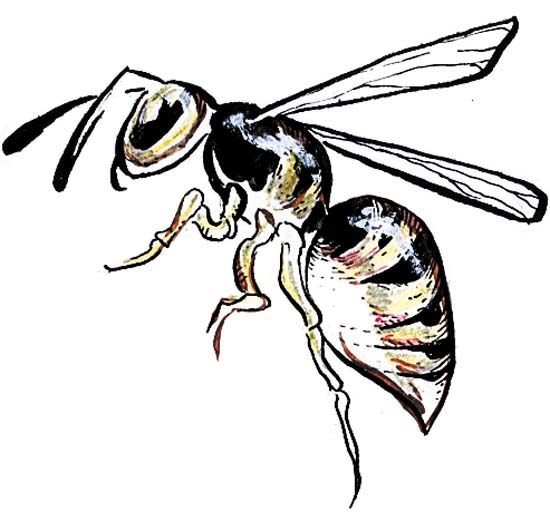 550x525 Image Result For Wasp Drawing Drawings Wasp