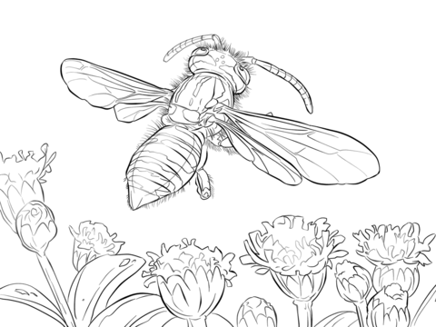 480x360 Yellow Jacket Wasp Coloring Page Free Printable Coloring Pages