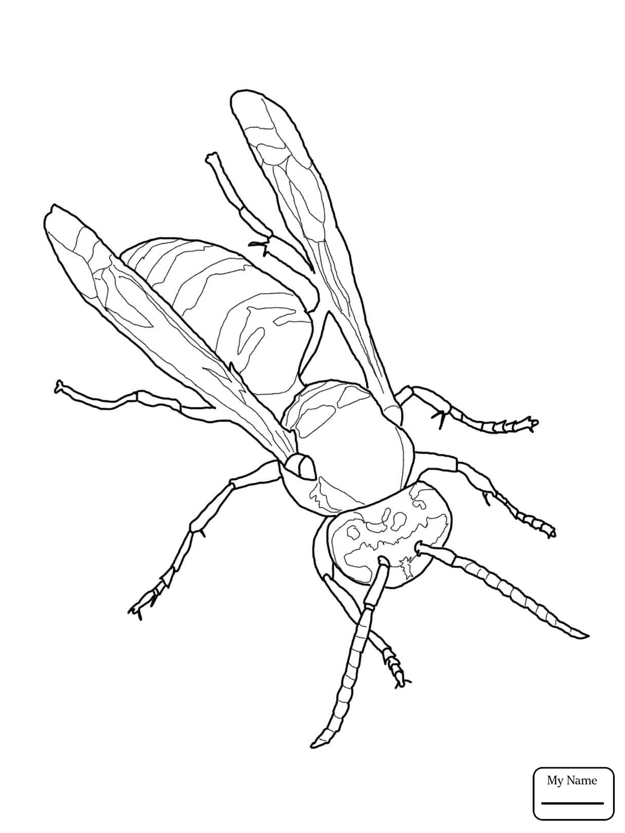 1224x1632 Coloring Pages For Kids Insects Wasp Eastern Yellow Jacket