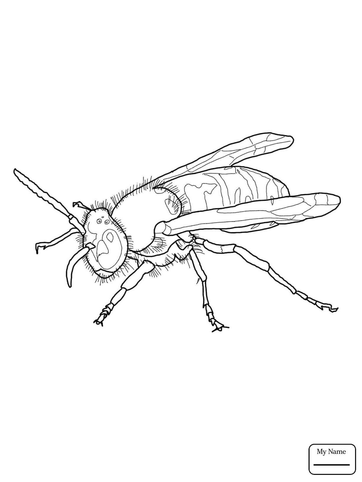 1224x1632 Coloring Pages Insects Wasp Eastern Yellow Jacket