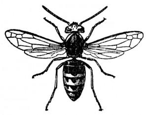 300x234 Bees Amp Wasps