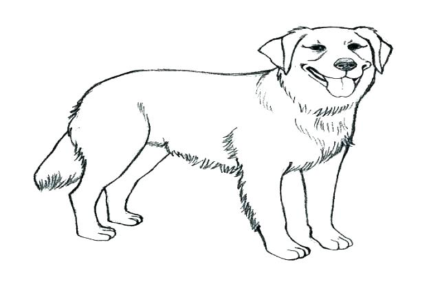 640x420 Black Lab Coloring Pages Yellow Lab Coloring Pages Chocolate