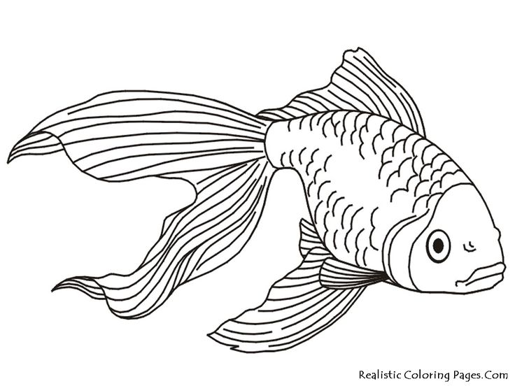 736x552 Outline Drawings Of Fish Group 75
