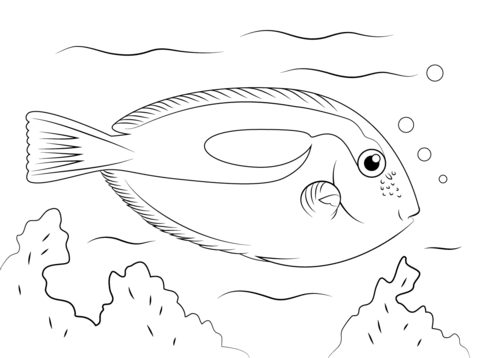 480x358 Blue Tang Coloring Page Free Printable Pages