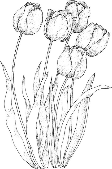 474x715 How To Draw A Tulip Httpwww.easy Drawings