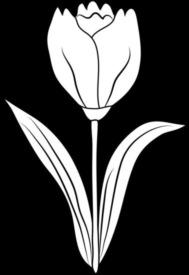 Yellow Tulip Drawing At Getdrawings Com