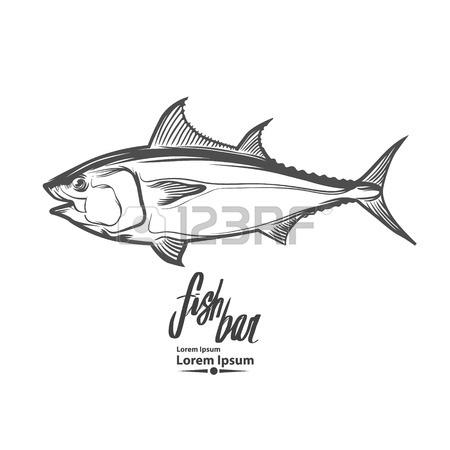 Yellowfin Tuna Drawing