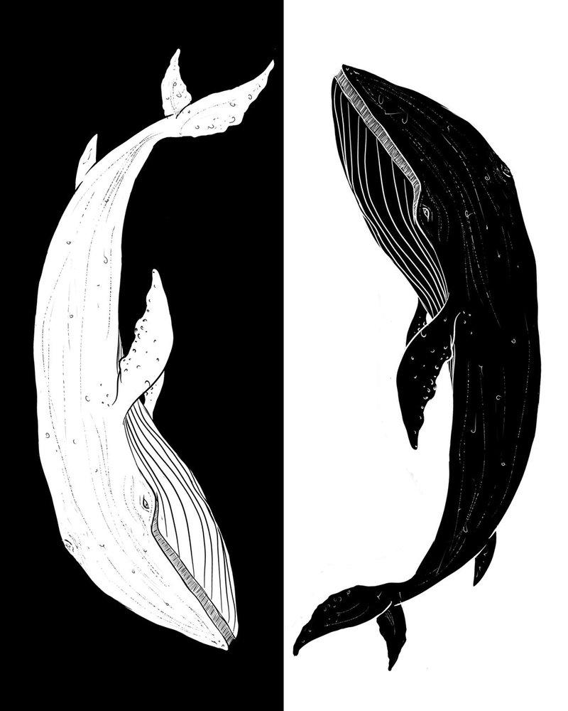 800x1000 Blue Whale Ying Yang By Senpaisama Chan