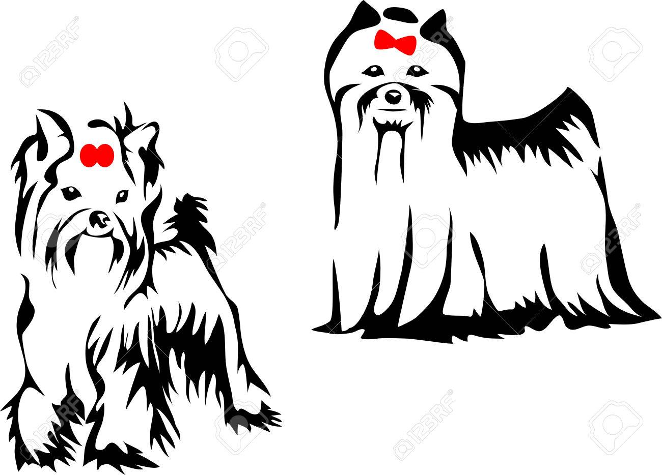 1300x934 Yorkshire Terrier Stock Photos. Royalty Free Business Images
