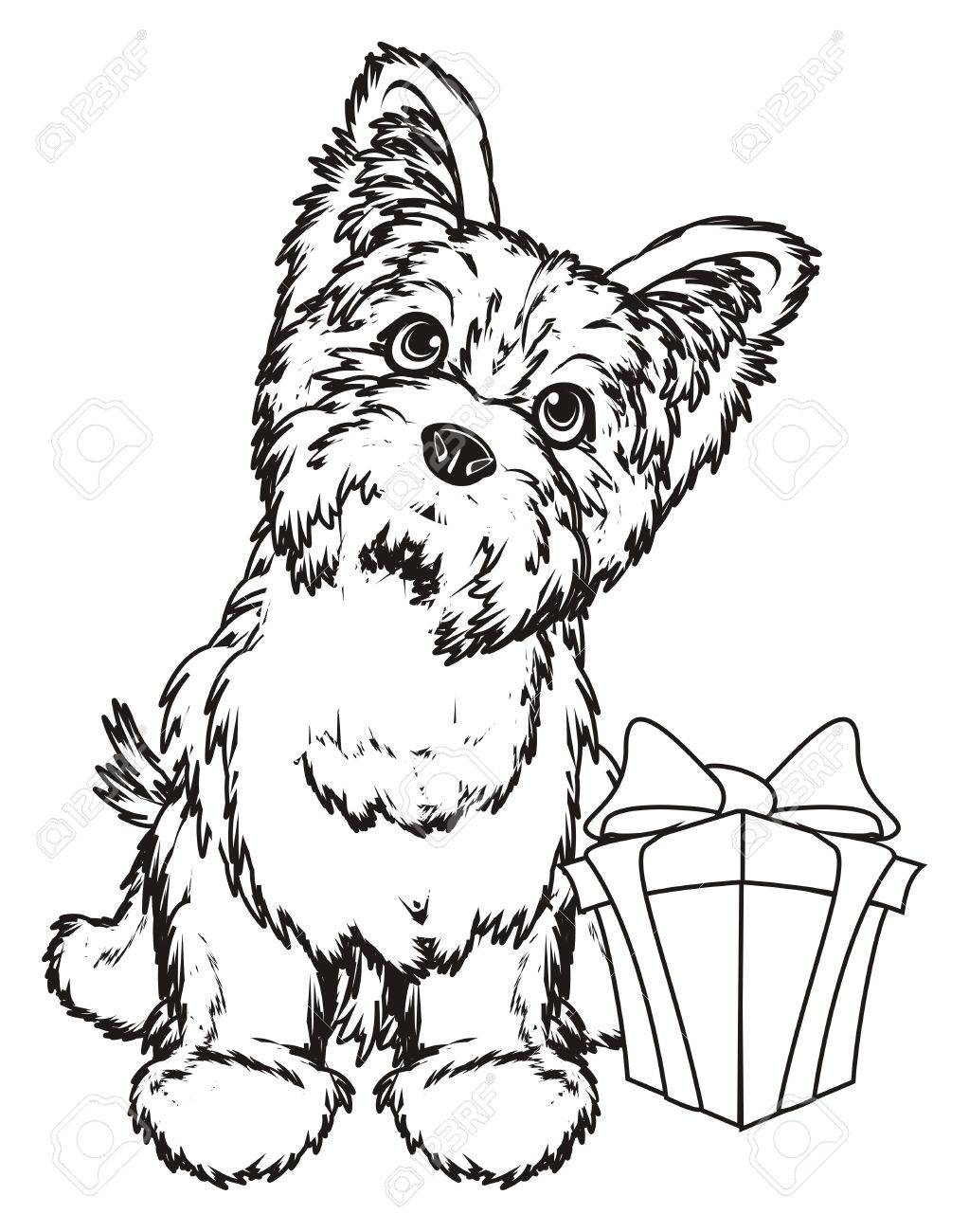 1023x1300 Coloring Yorkshire Terrier With A Gift Stock Photo, Picture