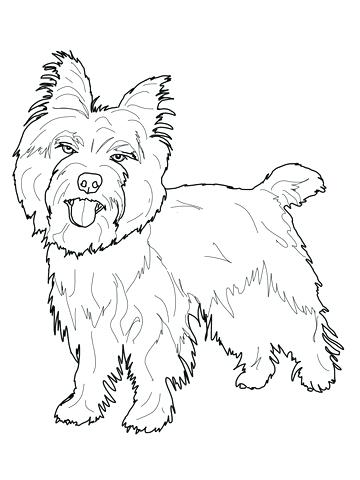 360x480 Yorkie Coloring Page Terrier Coloring Pages Illustration