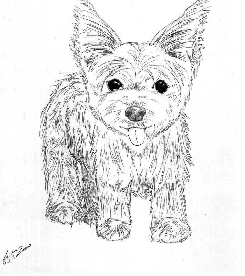 841x950 Yorkshire Terrier By Thewolfnamedcc