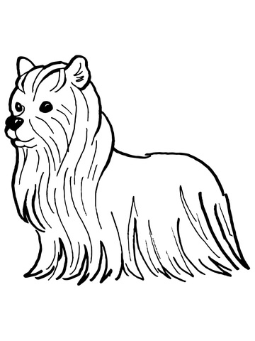 360x480 Yorkshire Terrier Coloring Page Free Printable Coloring Pages