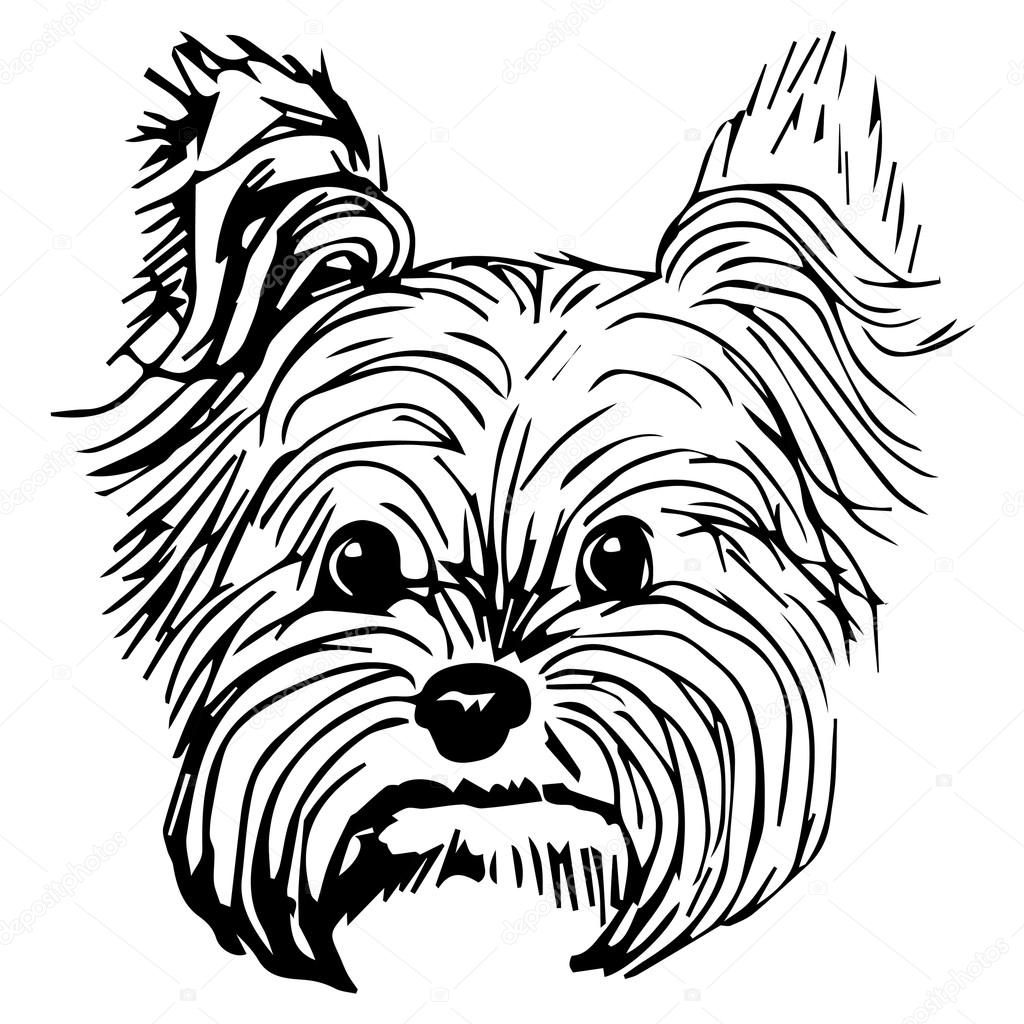 Line Drawing Of Yorkshire Terrier : Yorkie dog drawing at getdrawings free for personal