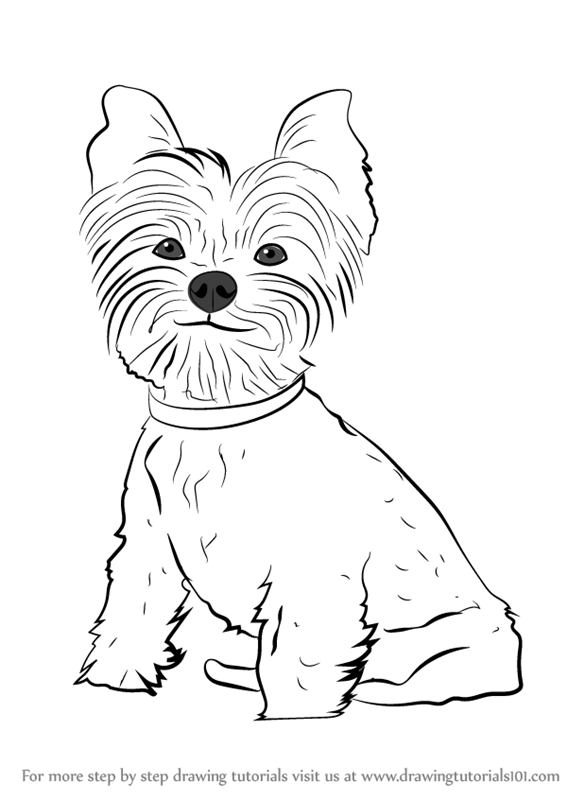 567x800 Learn How To Draw Yorkie Puppy (Dogs) Step By Step Drawing Tutorials