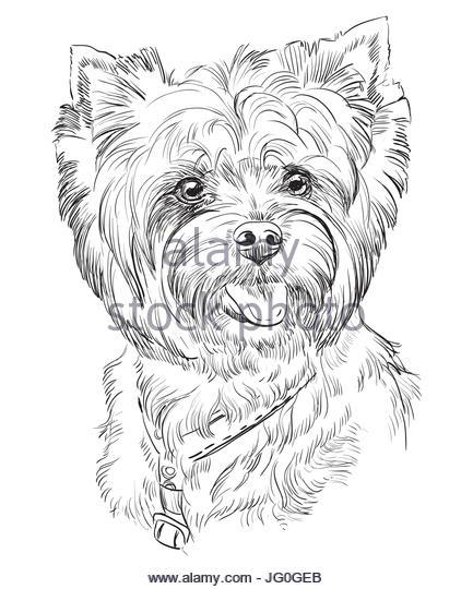 433x540 Shaggy Terrier Stock Photos Amp Shaggy Terrier Stock Images