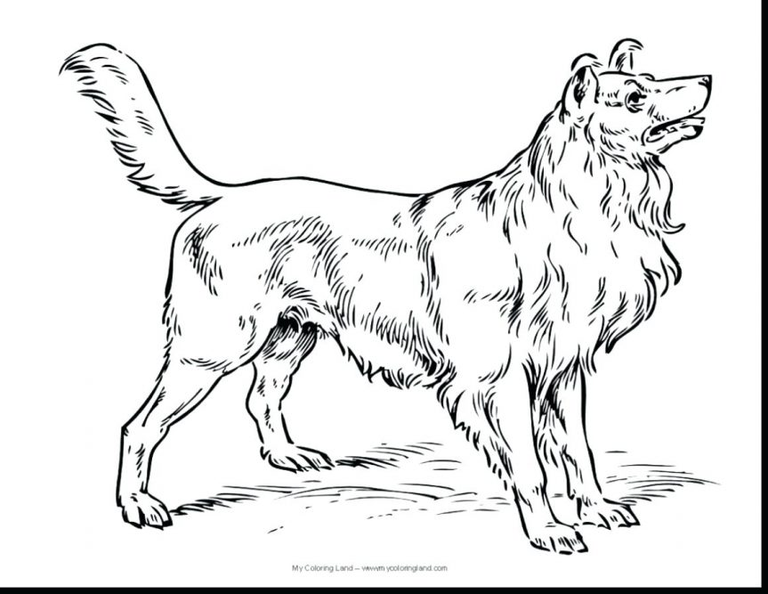 863x667 Sketch Funny Dog Terrier Breed Sitting Hand Drawing Vector Stock