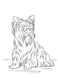236x316 Yorkie Coloring Page Free Download