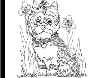 340x270 Baby Yorkie Coloring Sheets Picures Of Yorkies Coloring Pages