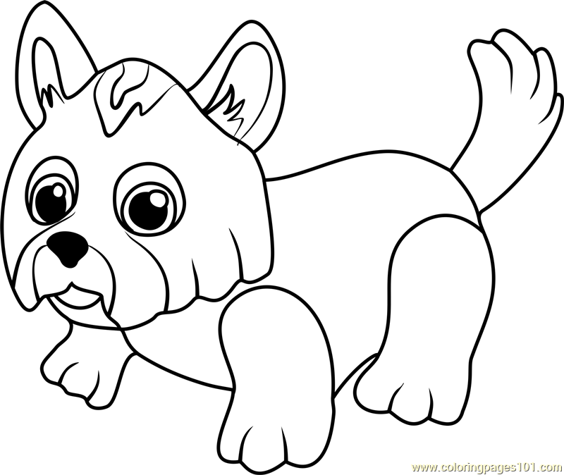 800x674 Yorkshire Terrier Coloring Page