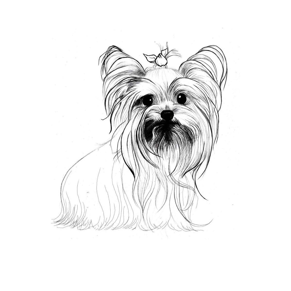 1200x1200 Line Drawing Of Yorkie. Minimalist, Line Drawings, Water Color