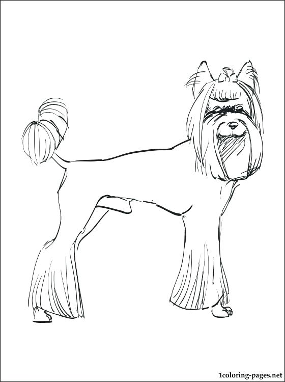 560x750 New Yorkie Coloring Page Free Download