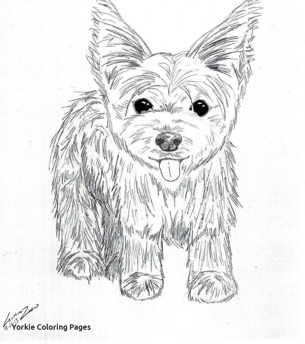 Yorkie Line Drawing at GetDrawings.com | Free for personal use ...