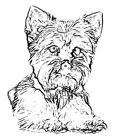 367x443 Yorkie Coloring Page Free Download