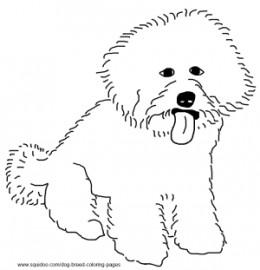 260x270 Bichon Poodle