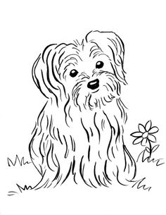 yorkie puppy drawing at getdrawings   free download