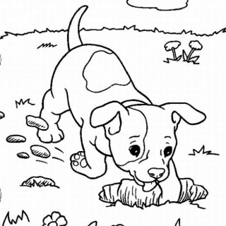 Yorkie Puppy Drawing at GetDrawings com | Free for personal