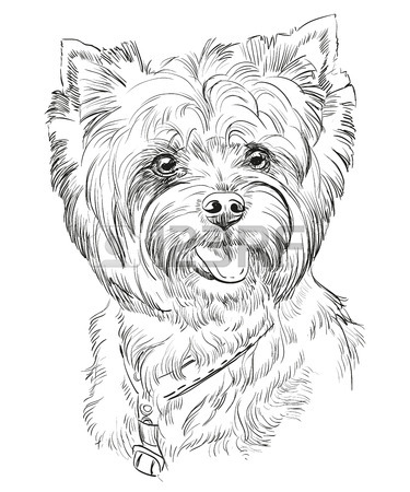 375x450 Vector Portrait Of Yorkshire Terrier In Black Color Hand Drawing